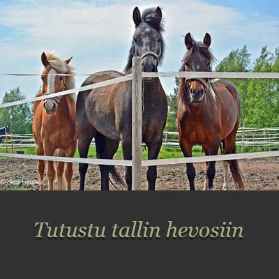 hevosetlinkki