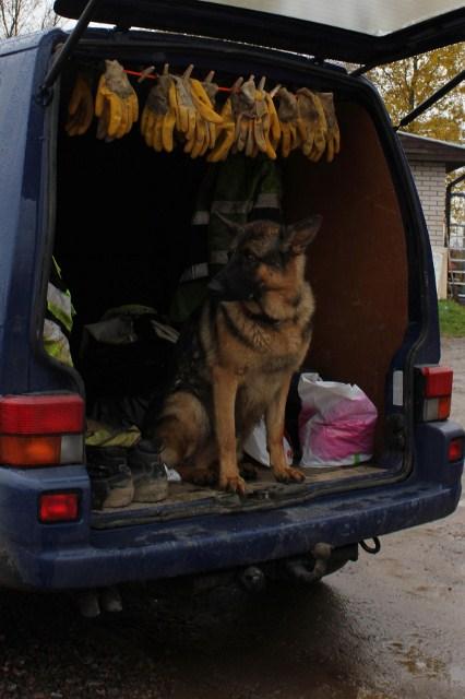 Seri koira joka on nähnyt tallin viemäröinnin ja ilmastoinnin.. plus kaikki siltä väliltä.