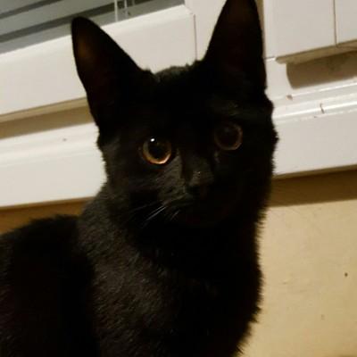 Yksi pieni kissa muuttaa paluun tyhjään taloon kotiinpaluuksi