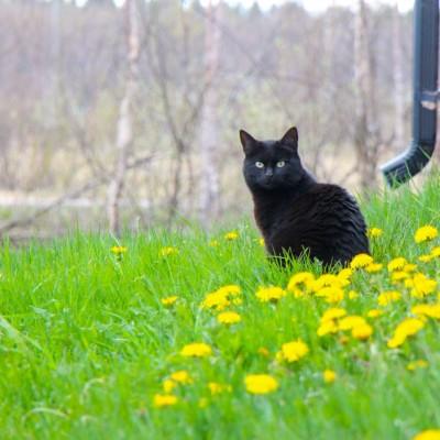 Kisse Häkkinen